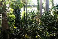 patten_botanicalgarden_8257
