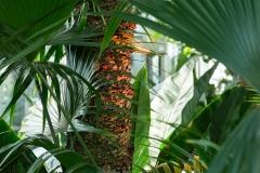 patten_botanicalgarden_8611