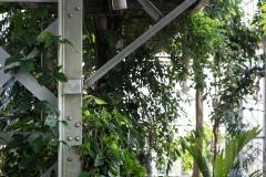 patten_botanicalgarden_8621